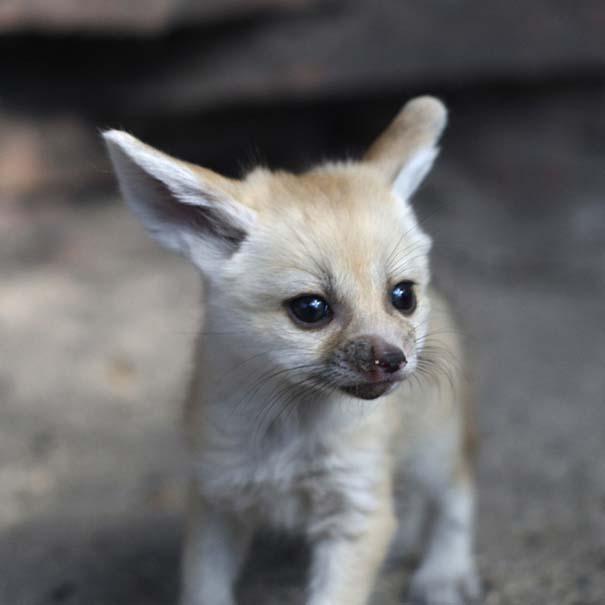 Οι πιο αξιολάτρευτες φωτογραφίες με μωρά ζώων του 2012 (12)
