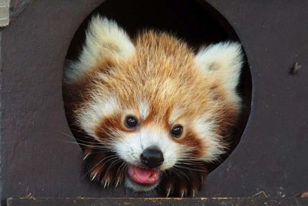 Οι πιο αξιολάτρευτες φωτογραφίες με μωρά ζώων του 2012 (16)