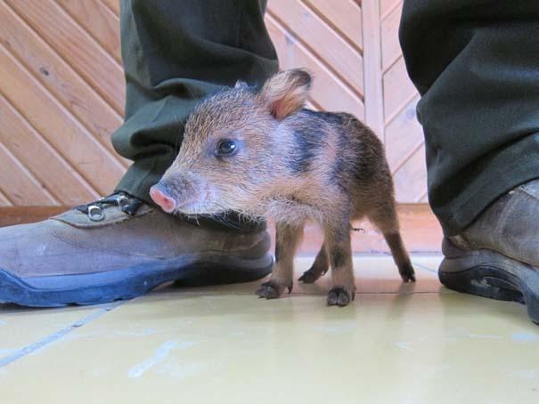 Οι πιο αξιολάτρευτες φωτογραφίες με μωρά ζώων του 2012 (17)