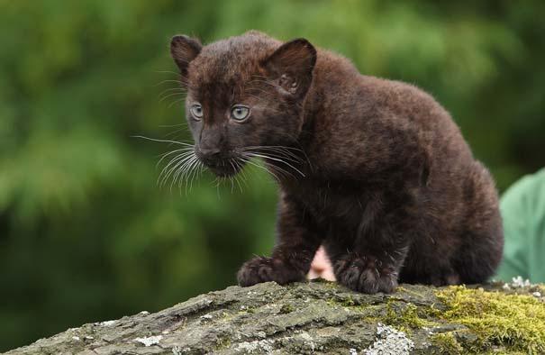 Οι πιο αξιολάτρευτες φωτογραφίες με μωρά ζώων του 2012 (18)