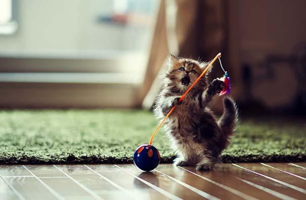 Οι πιο αξιολάτρευτες φωτογραφίες με μωρά ζώων του 2012 (19)