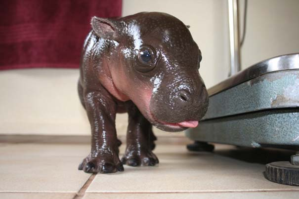 Οι πιο αξιολάτρευτες φωτογραφίες με μωρά ζώων του 2012 (20)
