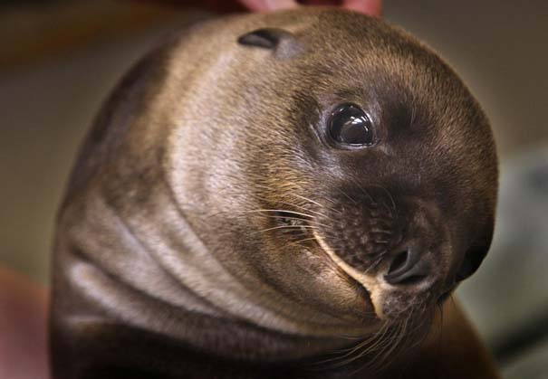 Οι πιο αξιολάτρευτες φωτογραφίες με μωρά ζώων του 2012 (21)
