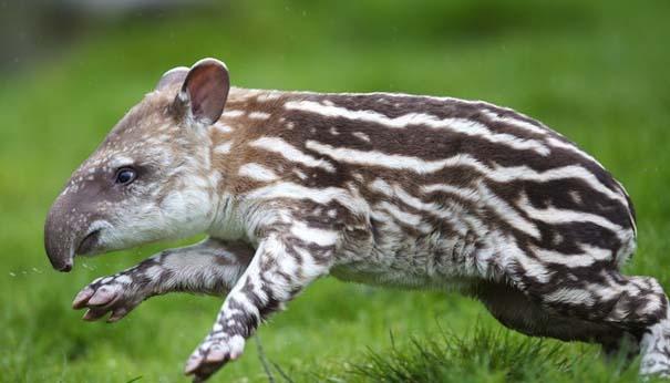 Οι πιο αξιολάτρευτες φωτογραφίες με μωρά ζώων του 2012 (23)