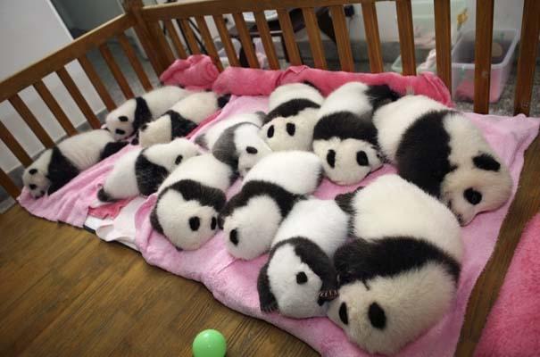 Οι πιο αξιολάτρευτες φωτογραφίες με μωρά ζώων του 2012 (24)