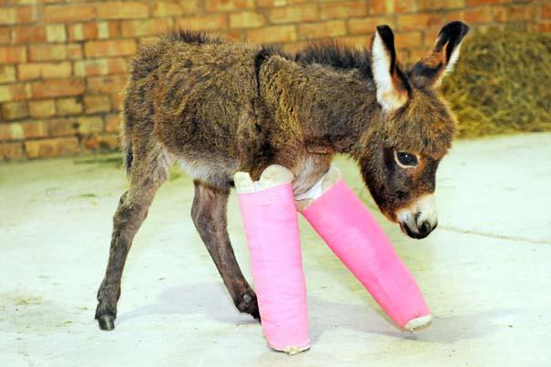 Οι πιο αξιολάτρευτες φωτογραφίες με μωρά ζώων του 2012 (25)