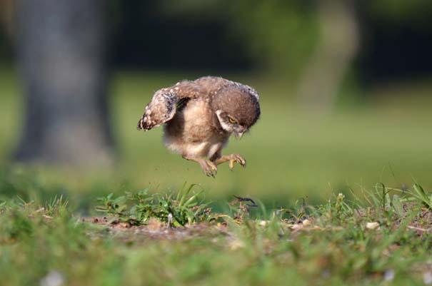Οι πιο αξιολάτρευτες φωτογραφίες με μωρά ζώων του 2012 (28)