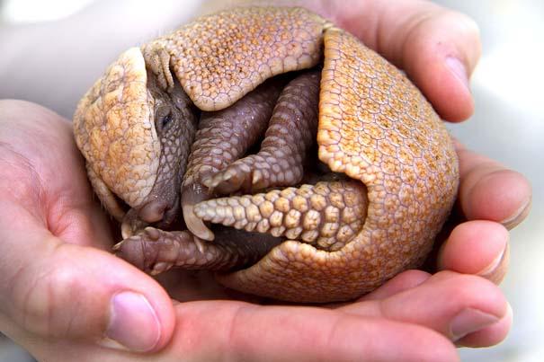 Οι πιο αξιολάτρευτες φωτογραφίες με μωρά ζώων του 2012 (29)