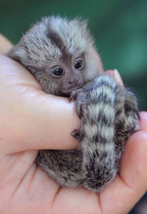 Οι πιο αξιολάτρευτες φωτογραφίες με μωρά ζώων του 2012 (30)