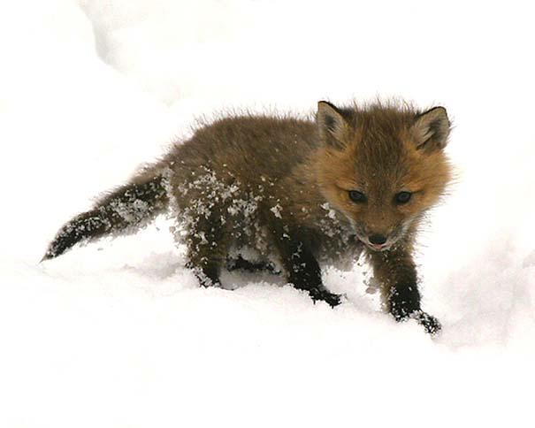 Οι πιο αξιολάτρευτες φωτογραφίες με μωρά ζώων του 2012 (31)
