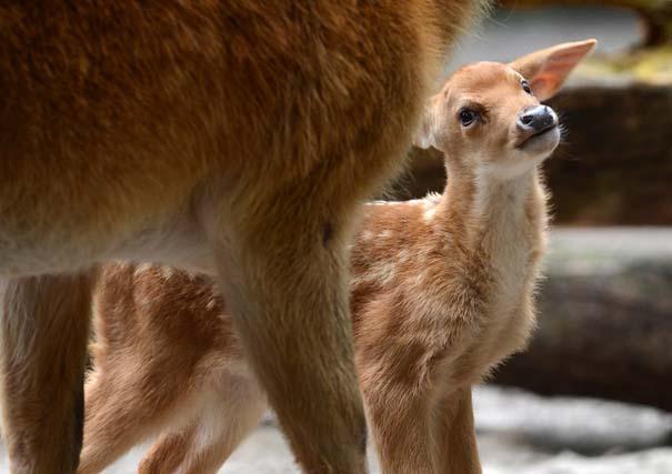 Οι πιο αξιολάτρευτες φωτογραφίες με μωρά ζώων του 2012 (33)