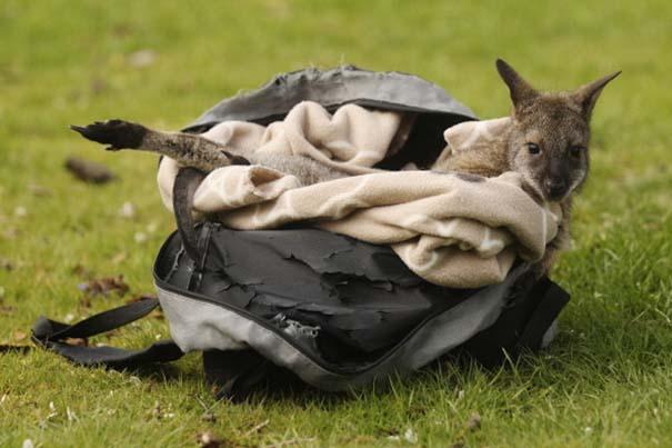 Οι πιο αξιολάτρευτες φωτογραφίες με μωρά ζώων του 2012 (34)