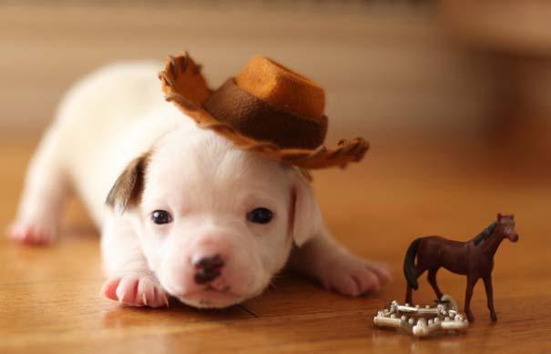 Οι πιο αξιολάτρευτες φωτογραφίες με μωρά ζώων του 2012 (35)