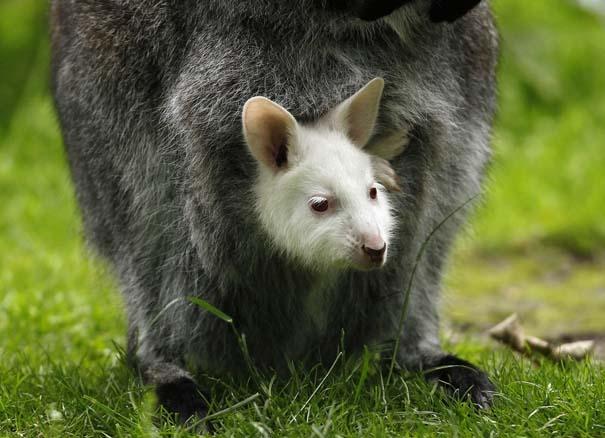 Οι πιο αξιολάτρευτες φωτογραφίες με μωρά ζώων του 2012 (36)