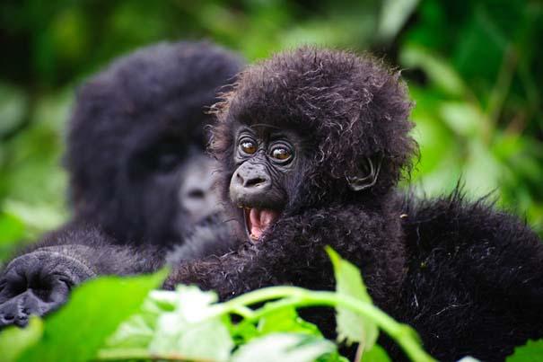 Οι πιο αξιολάτρευτες φωτογραφίες με μωρά ζώων του 2012 (37)