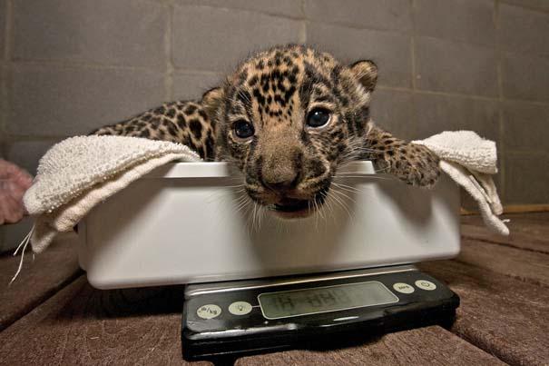 Οι πιο αξιολάτρευτες φωτογραφίες με μωρά ζώων του 2012 (38)
