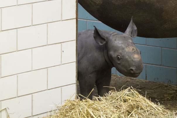Οι πιο αξιολάτρευτες φωτογραφίες με μωρά ζώων του 2012 (40)