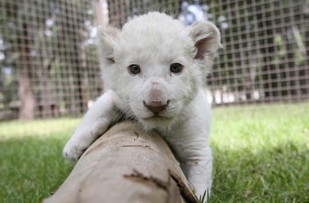 Οι πιο αξιολάτρευτες φωτογραφίες με μωρά ζώων του 2012 (42)