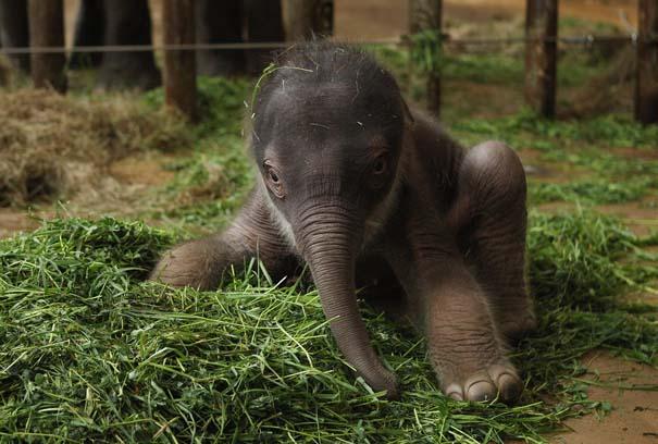 Οι πιο αξιολάτρευτες φωτογραφίες με μωρά ζώων του 2012 (43)
