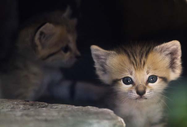 Οι πιο αξιολάτρευτες φωτογραφίες με μωρά ζώων του 2012 (44)