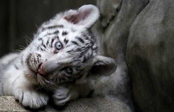 Οι πιο αξιολάτρευτες φωτογραφίες με μωρά ζώων του 2012 (45)