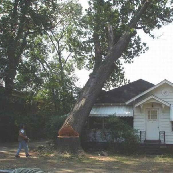 Ένα δέντρο, ένα πριόνι και δυο άνδρες χωρίς μυαλό... (2)