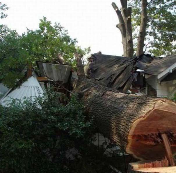 Ένα δέντρο, ένα πριόνι και δυο άνδρες χωρίς μυαλό... (4)