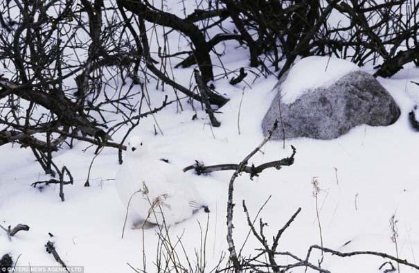 Μπορείτε να εντοπίσετε τα κρυμμένα ζώα σε αυτές τις φωτογραφίες; (1)