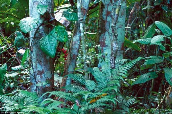 Μπορείτε να εντοπίσετε τα κρυμμένα ζώα σε αυτές τις φωτογραφίες; (7)