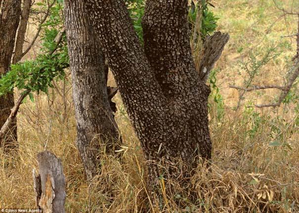 Μπορείτε να εντοπίσετε τα κρυμμένα ζώα σε αυτές τις φωτογραφίες; (9)