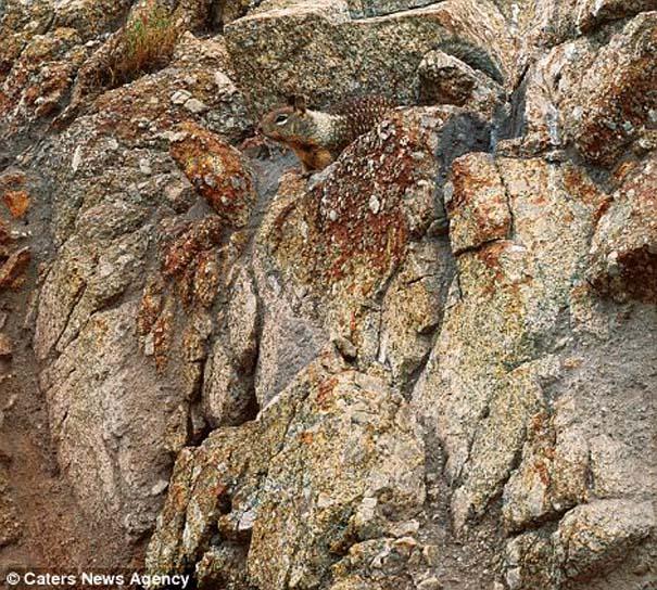 Μπορείτε να εντοπίσετε τα κρυμμένα ζώα σε αυτές τις φωτογραφίες; (11)