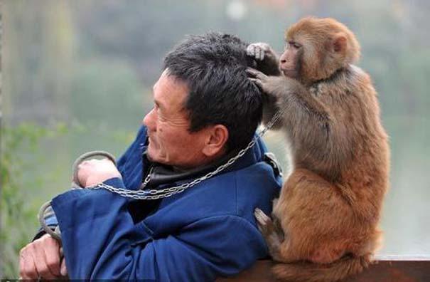 Εξυπηρετικά ζώα (3)