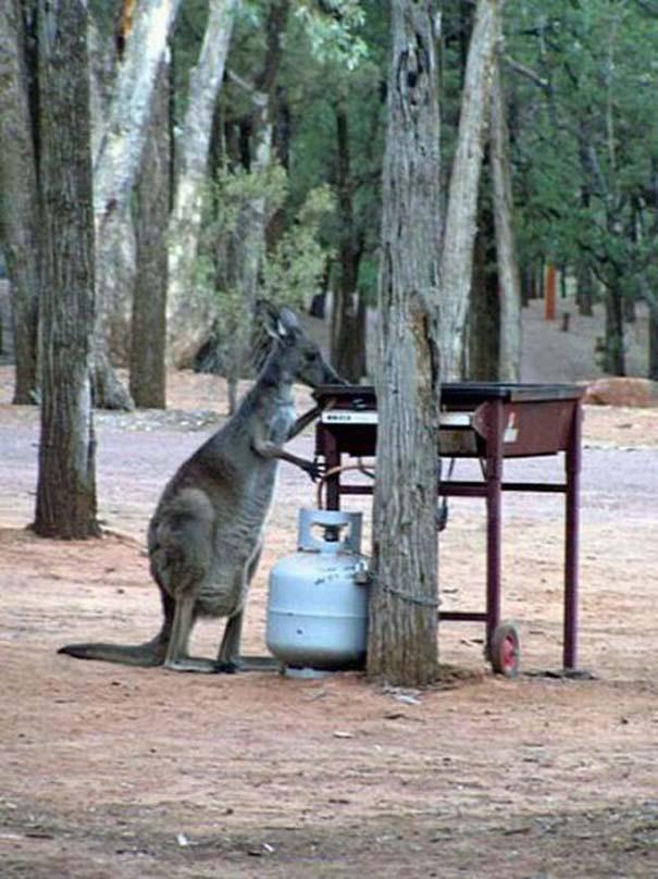 Μόνο στην Αυστραλία (12)