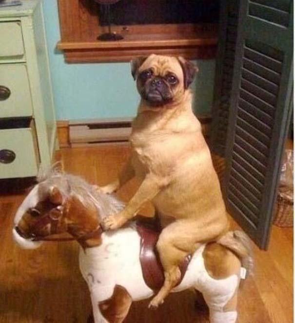 Οι πιο παράξενες & αστείες φωτογραφίες ζώων του 2012 (2)