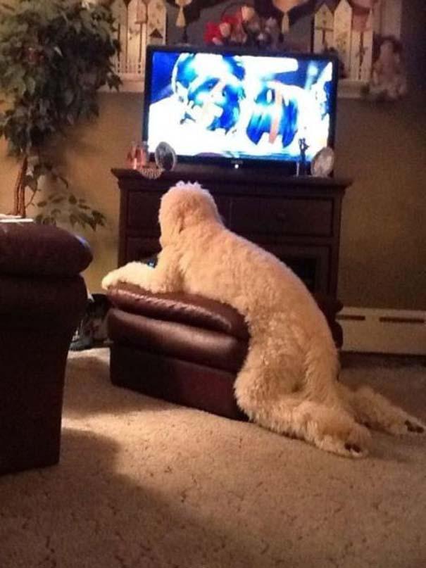Οι πιο παράξενες & αστείες φωτογραφίες ζώων του 2012 (3)