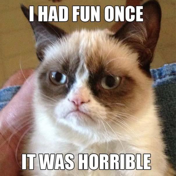 Οι πιο παράξενες & αστείες φωτογραφίες ζώων του 2012 (5)