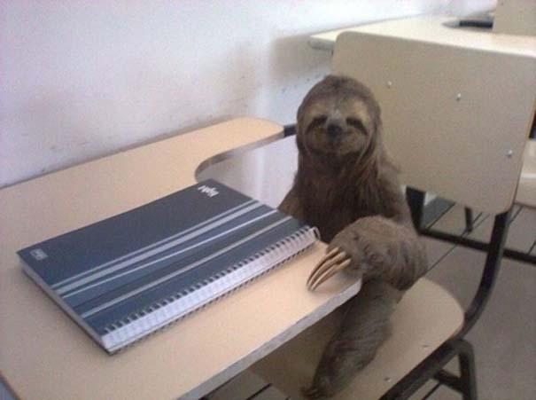 Οι πιο παράξενες & αστείες φωτογραφίες ζώων του 2012 (10)