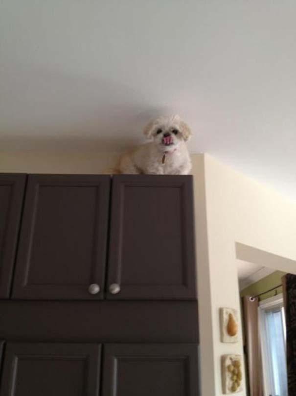 Οι πιο παράξενες & αστείες φωτογραφίες ζώων του 2012 (11)