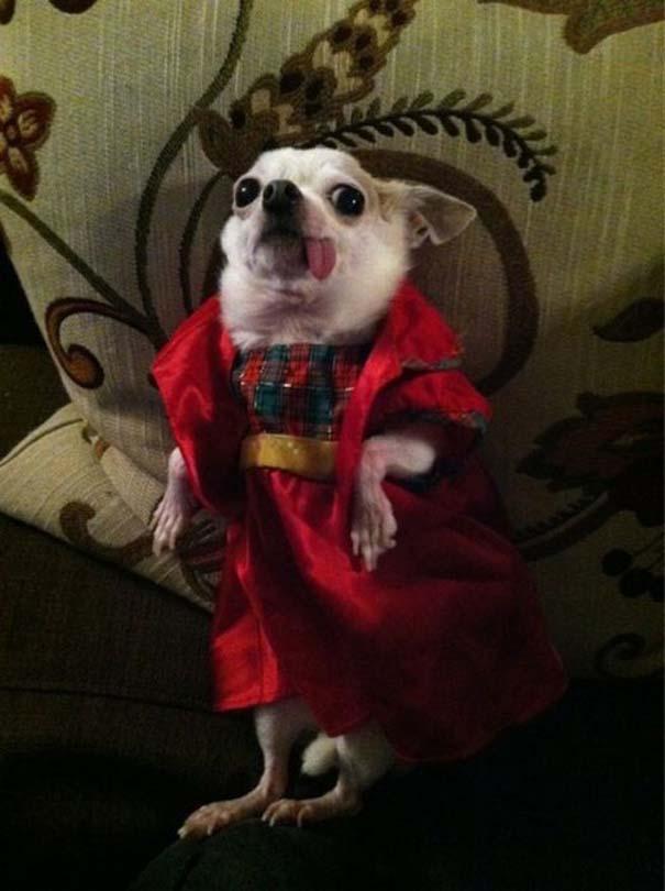 Οι πιο παράξενες & αστείες φωτογραφίες ζώων του 2012 (12)