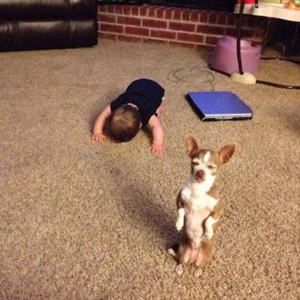 Οι πιο παράξενες & αστείες φωτογραφίες ζώων του 2012 (13)