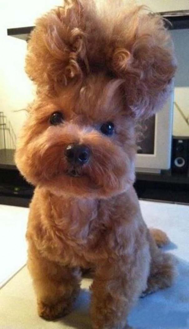 Οι πιο παράξενες & αστείες φωτογραφίες ζώων του 2012 (15)