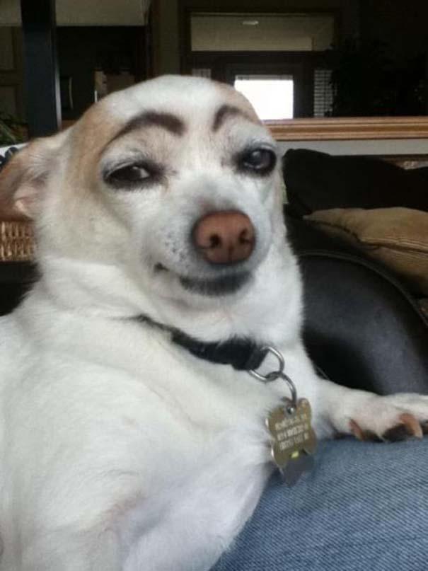 Οι πιο παράξενες & αστείες φωτογραφίες ζώων του 2012 (18)