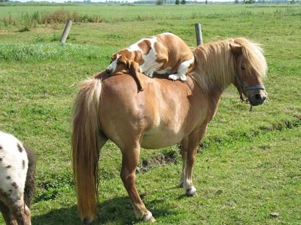 Οι πιο παράξενες & αστείες φωτογραφίες ζώων του 2012 (23)