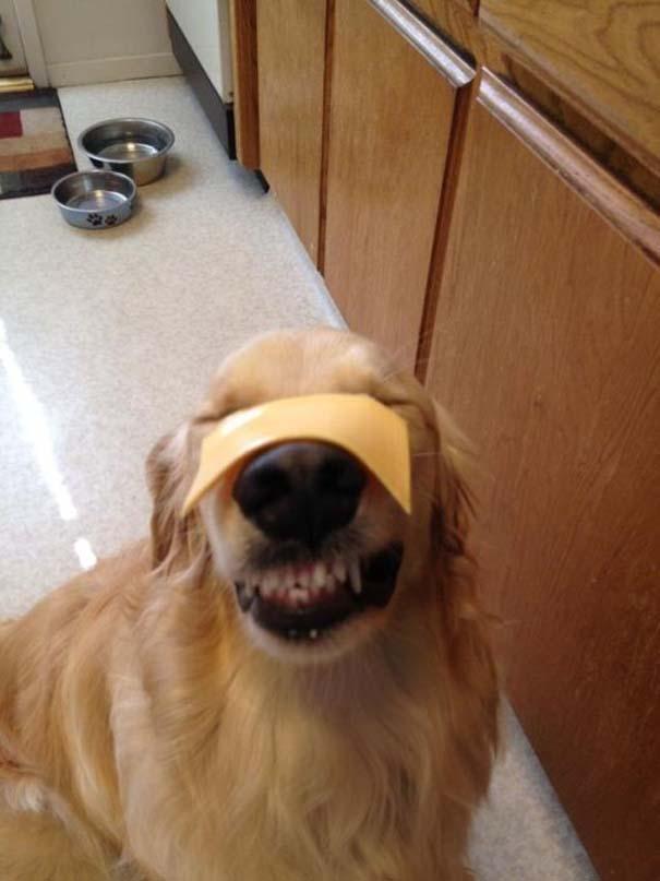 Οι πιο παράξενες & αστείες φωτογραφίες ζώων του 2012 (24)