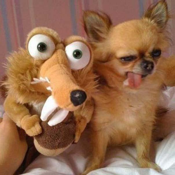Οι πιο παράξενες & αστείες φωτογραφίες ζώων του 2012 (25)
