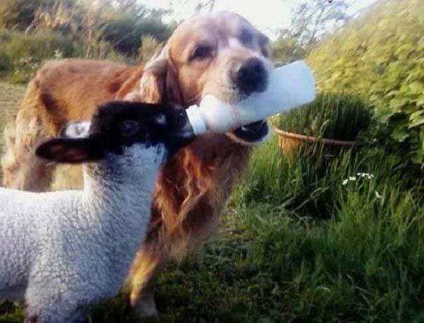 Οι πιο παράξενες & αστείες φωτογραφίες ζώων του 2012 (26)