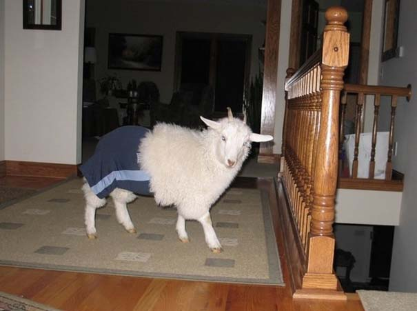 Οι πιο παράξενες & αστείες φωτογραφίες ζώων του 2012 (27)