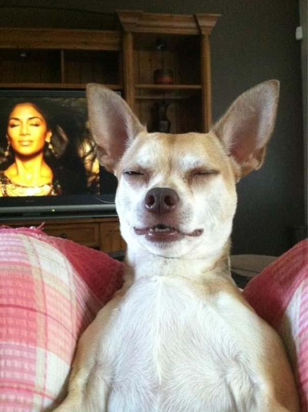 Οι πιο παράξενες & αστείες φωτογραφίες ζώων του 2012 (28)
