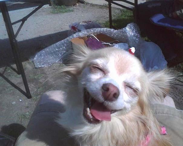 Οι πιο παράξενες & αστείες φωτογραφίες ζώων του 2012 (29)