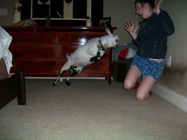 Οι πιο παράξενες & αστείες φωτογραφίες ζώων του 2012 (31)